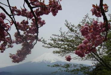 Интенсив-курс в Японии 2014. Яманаси додзе. День 7. Sightseen. Достопримечательности.